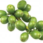 Зеленый кофе и похудение