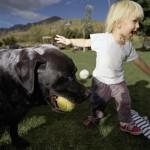 Дети и домашние животные. Как защитить их друг от друга.